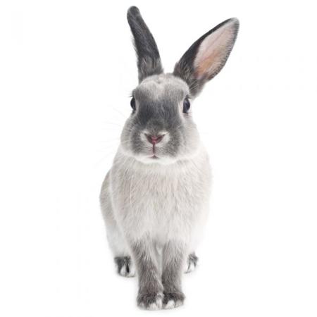 Dekornik® Bunny Harry S